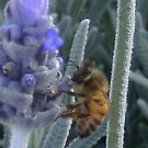 Lavender & Bee! by MaddyPaddy