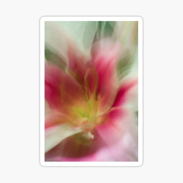 Fleur Blur-Abstract Pink, Yellow, White Lily Sticker