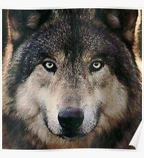 Game Thrones Wolf Stark 4 Poster