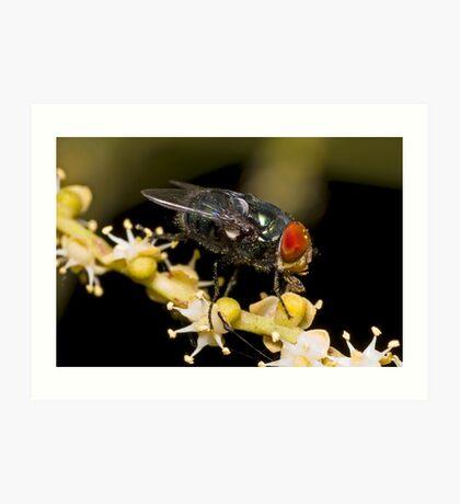 Bluebottle Fly on Palm Flower Art Print
