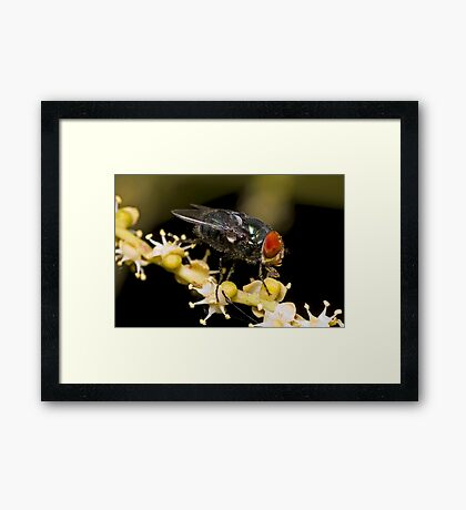 Bluebottle Fly on Palm Flower Framed Print