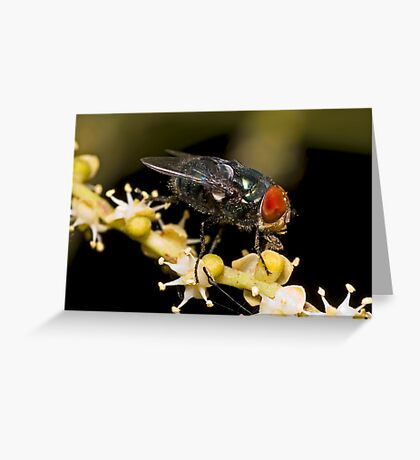 Bluebottle Fly on Palm Flower Greeting Card