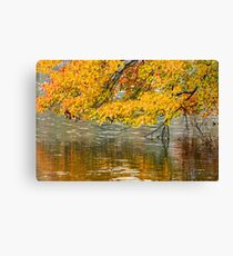 Yellow leaves hanging over the water Canvas Print