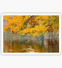Yellow leaves hanging over the water Sticker