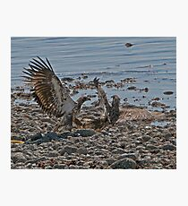 Fight on the Beach Photographic Print