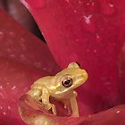 Baby tree frog by dragongirl222