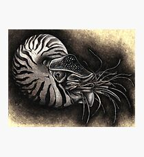 From the Earth: Nautilus Photographic Print