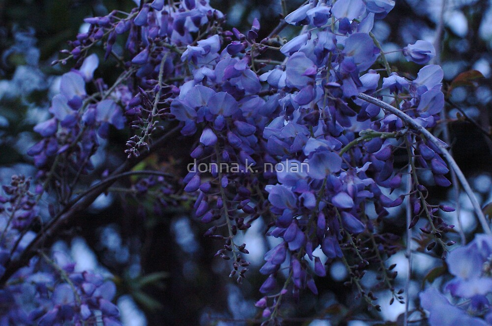 just hanging around. . . . . by donna.k. nolan