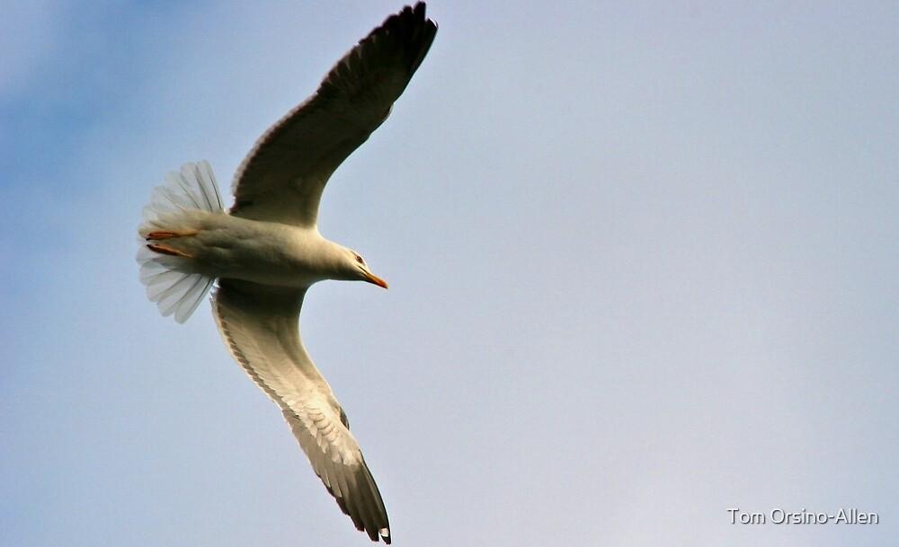 Seagull by Tom Allen
