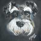 Harry the Miniature Schnauzer by Michelle Potter