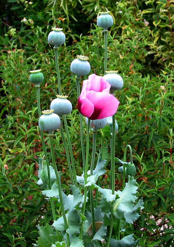 Tall Poppies by M. Stephanie Kellerman