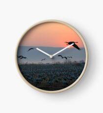 Common crane (Grus grus). Clock