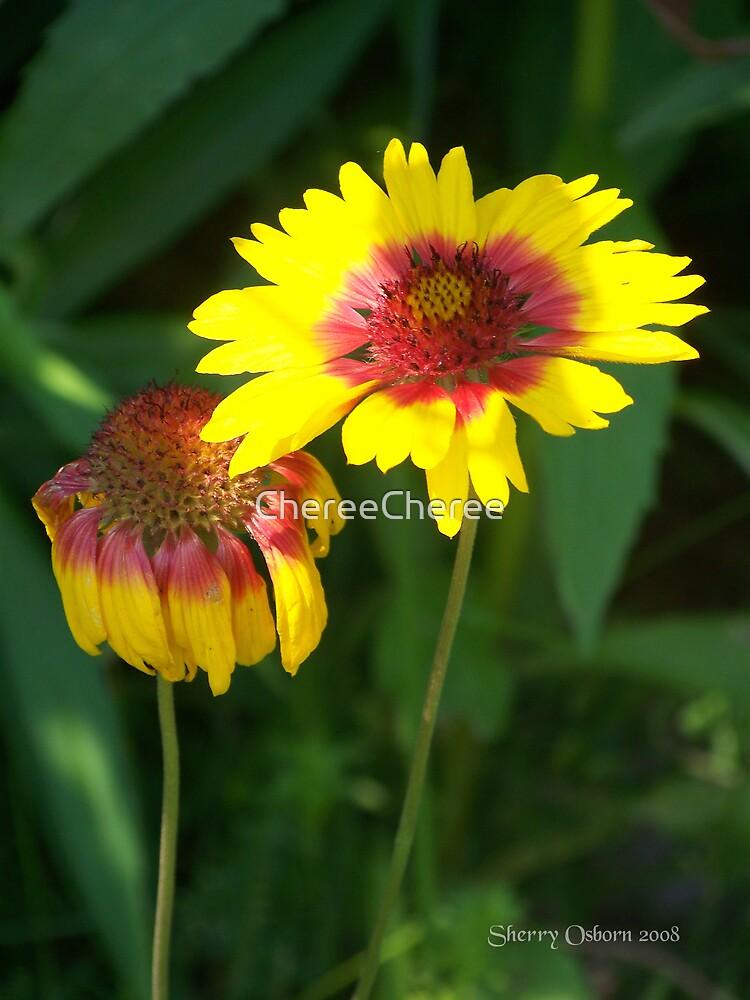 Blanket Flower by ChereeCheree