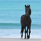 Stallion on the Beach by Michael  Dreese