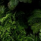 Tropischer Dschungel von VanGalt