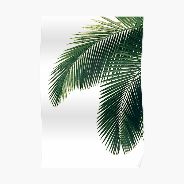 Tropical Palm Leaves Poster
