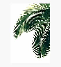 Tropical Palm Leaves Photographic Print