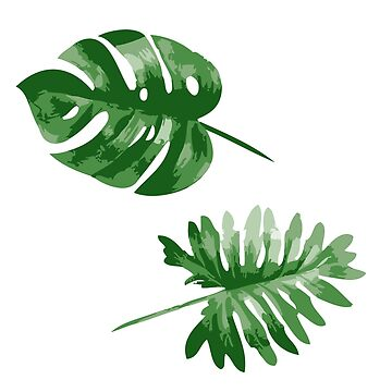 Monstera  by MyArt23