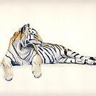 Siberian / Bengal Tiger by J-C Saint-Pô