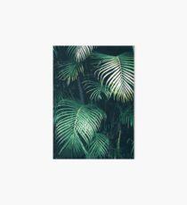 Lámina de exposición Hojas de palma tropical