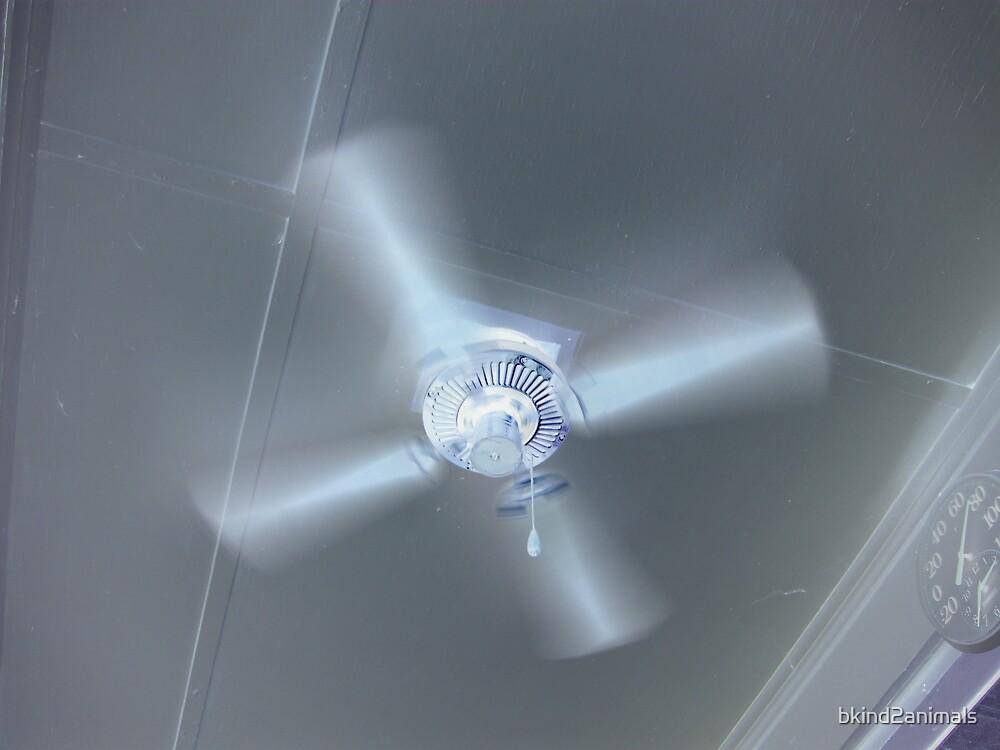 Hot Summer Fan by bkind2animals
