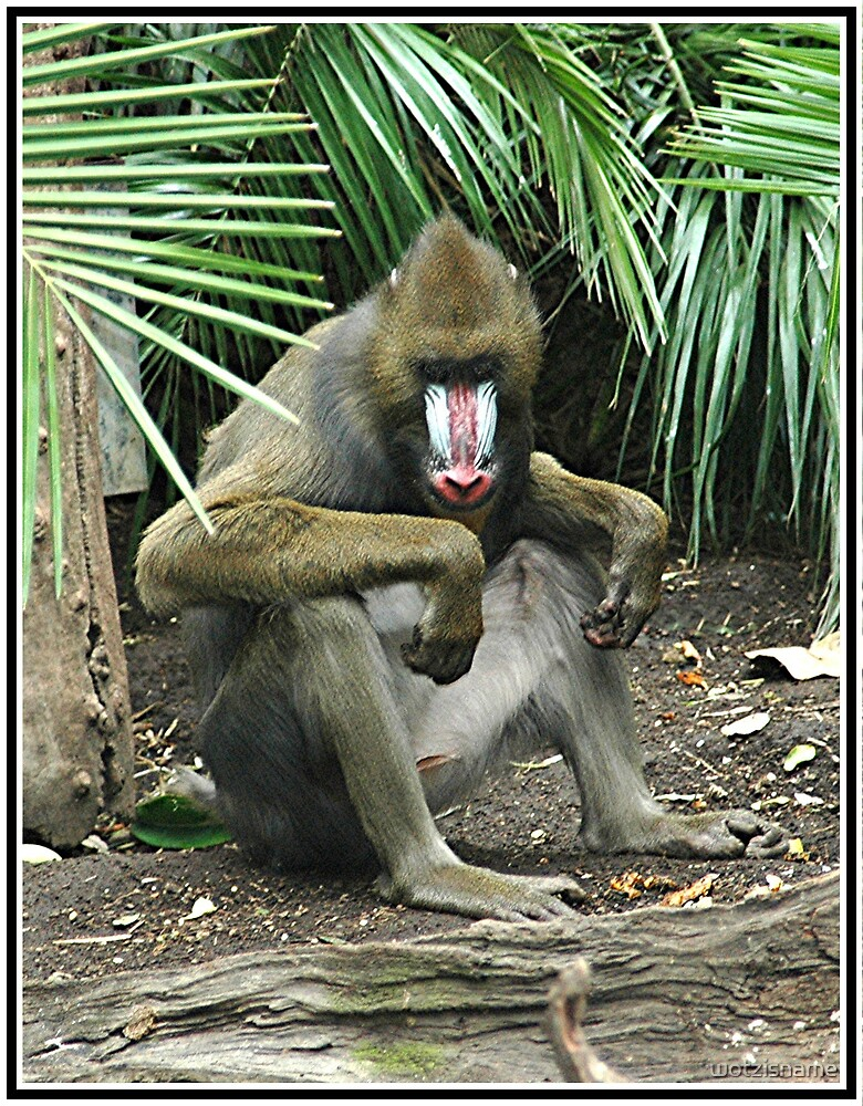 Mandrill by wotzisname