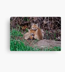 Fox Kit 7 Canvas Print