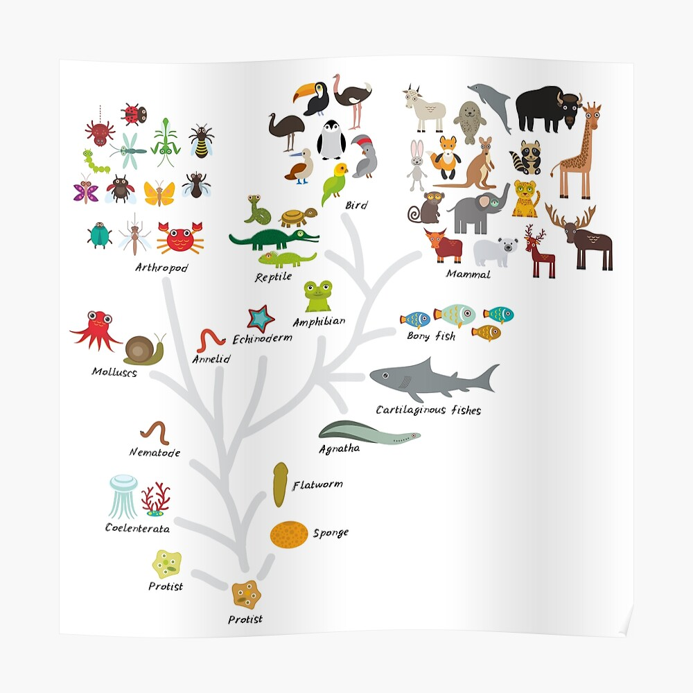 Evolution in biology, scheme evolution of animals isolated on white background. children's education, science. Evolution scale from unicellular organism to mammals. Poster