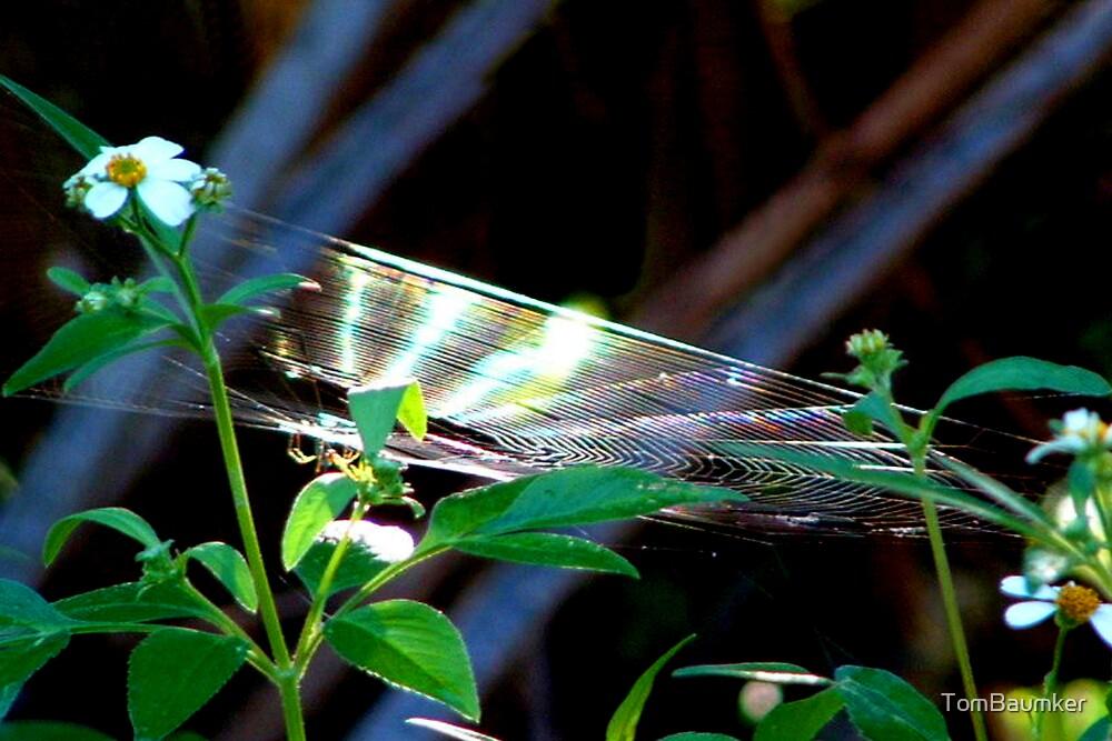 RAINBOW SPIDER WEB by TomBaumker