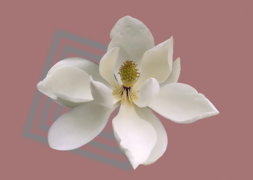 Magnolia Magic by LovelyFocus