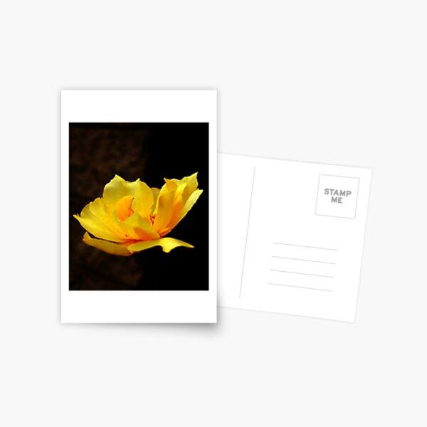The Awakening Postcard