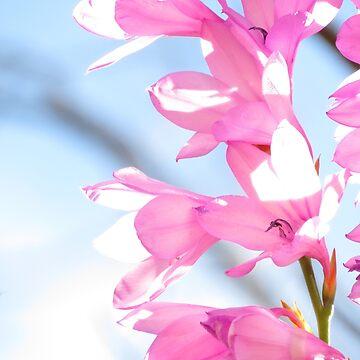 Blossoms by KlausTonitz