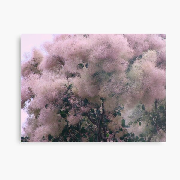 Pink Velvet  Metal Print