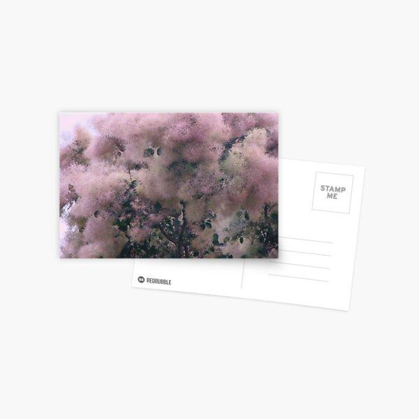 Pink Velvet  Postcard