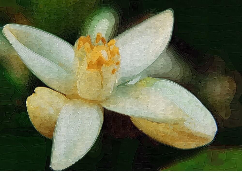 Orange Blossom by Mariann Kovats