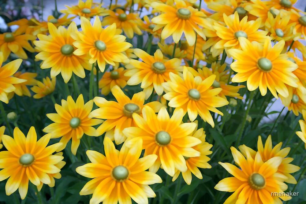 yellow flowers by rmenaker