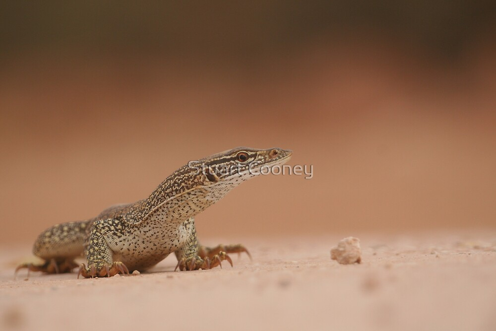 Sand Monitor by Stuart Cooney