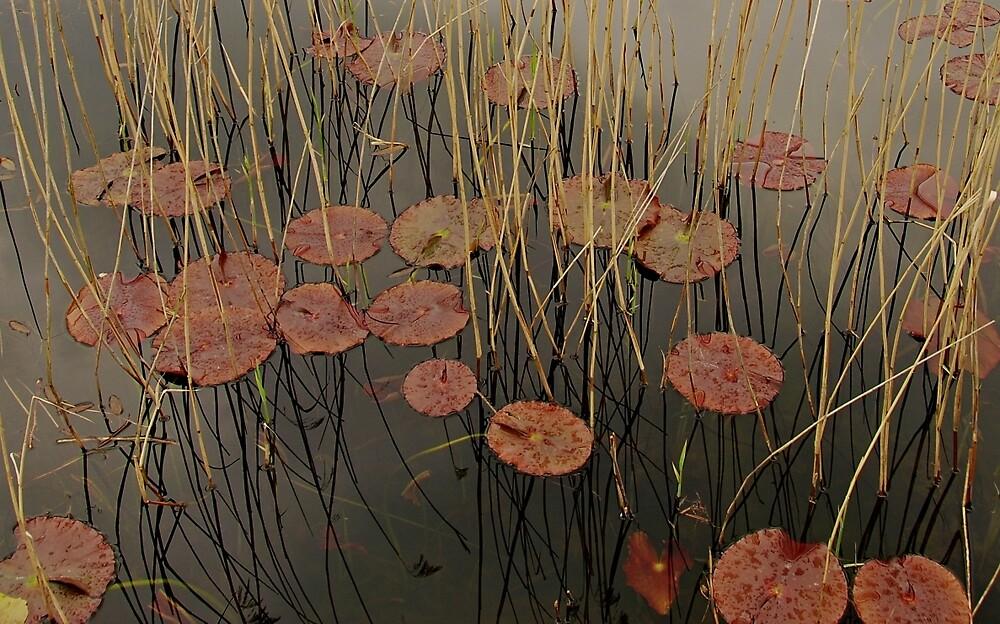 Chatsworth lilies by brilightning