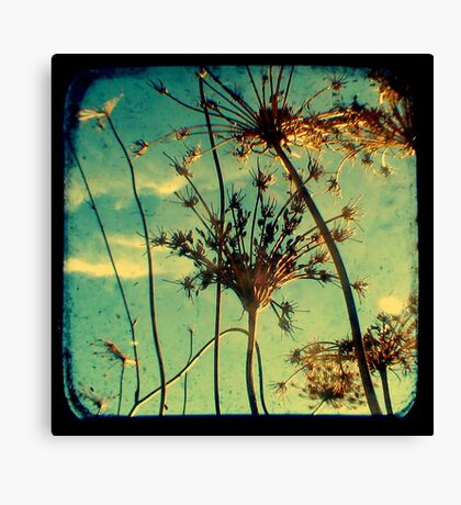 Head in the Clouds - TTV Canvas Print