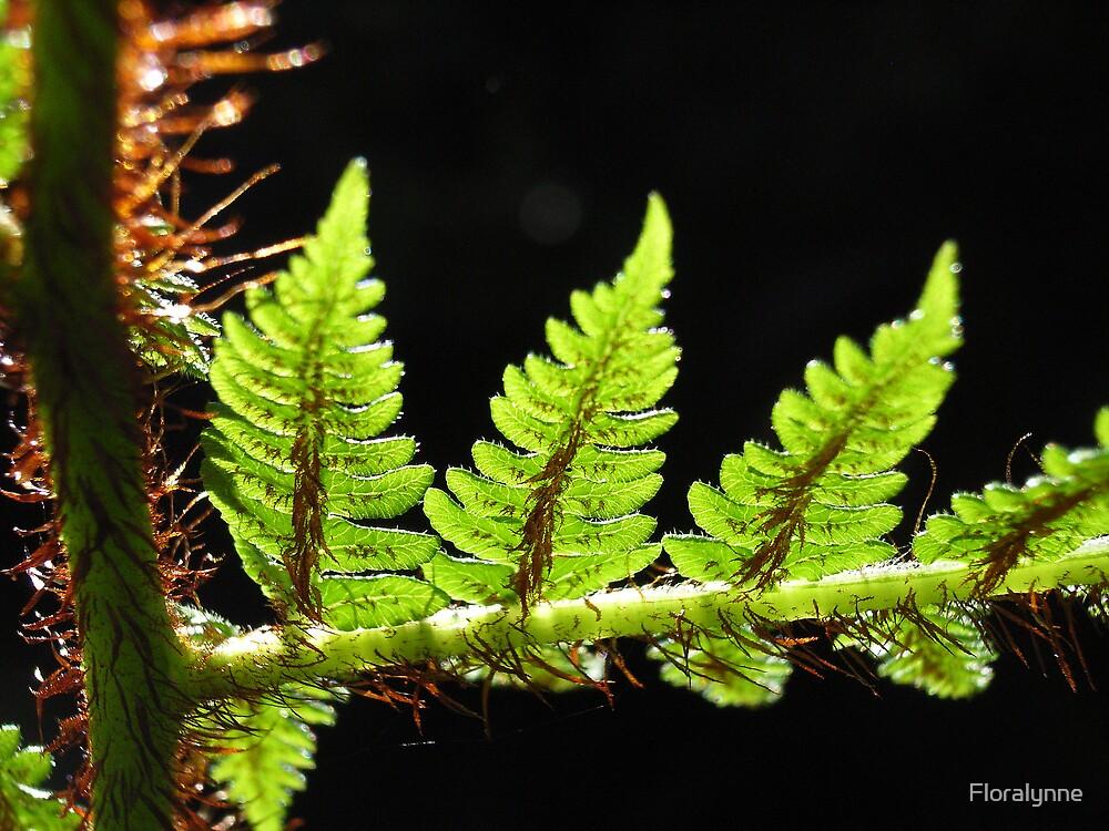 tree fern by Floralynne