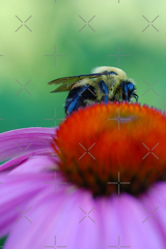 Busy Bee by lightman07