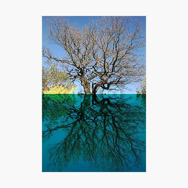 Dancers Tree Art Photo Photographic Print