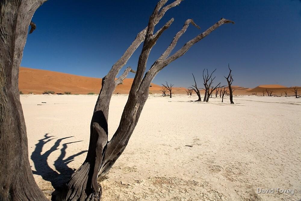 Sand Sea, Dead Vlei  by David Tovey