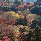 A valley in Kyoto by Stephen Colquitt
