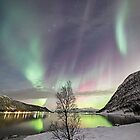 The lonely tree by Frank Olsen
