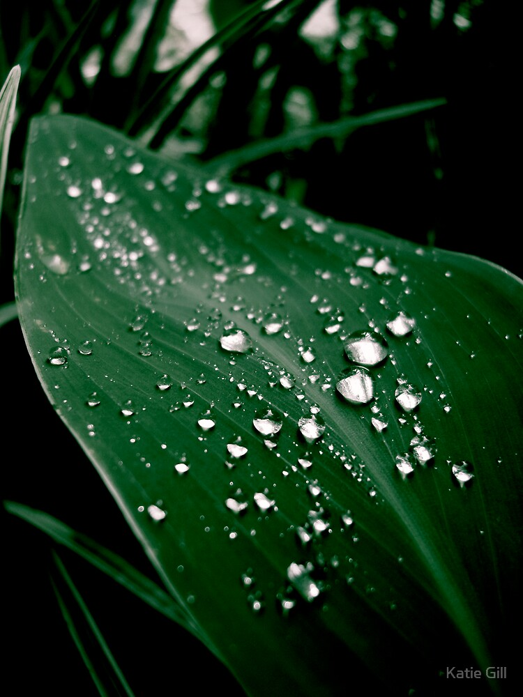 Dew Drops by Katie Gill
