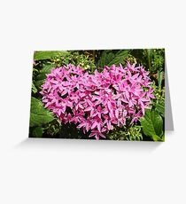 Starflower Heart Greeting Card