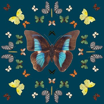 butterfly kaleidoscope | Animals by koovox