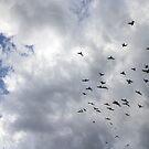 Flock Of Pigeons by Mythos57