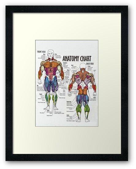 Láminas enmarcadas «Gráfico muscular - Diagrama de la anatomía para ...
